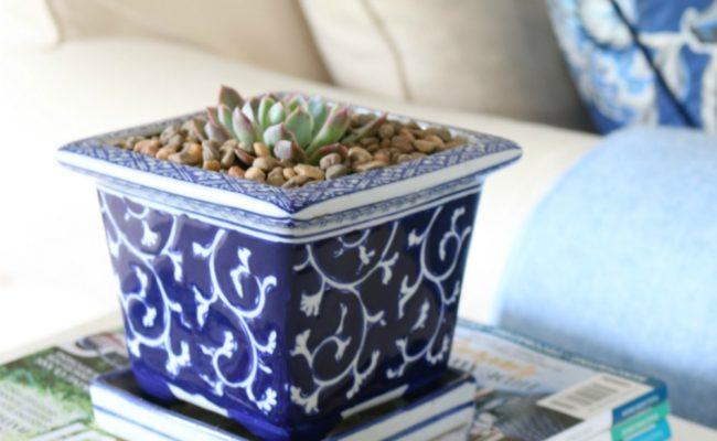 How to care for a Succulent plant